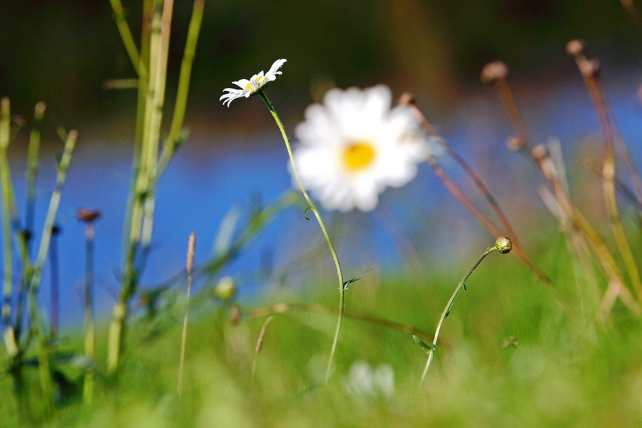 Natuurfotografie Noord Holland