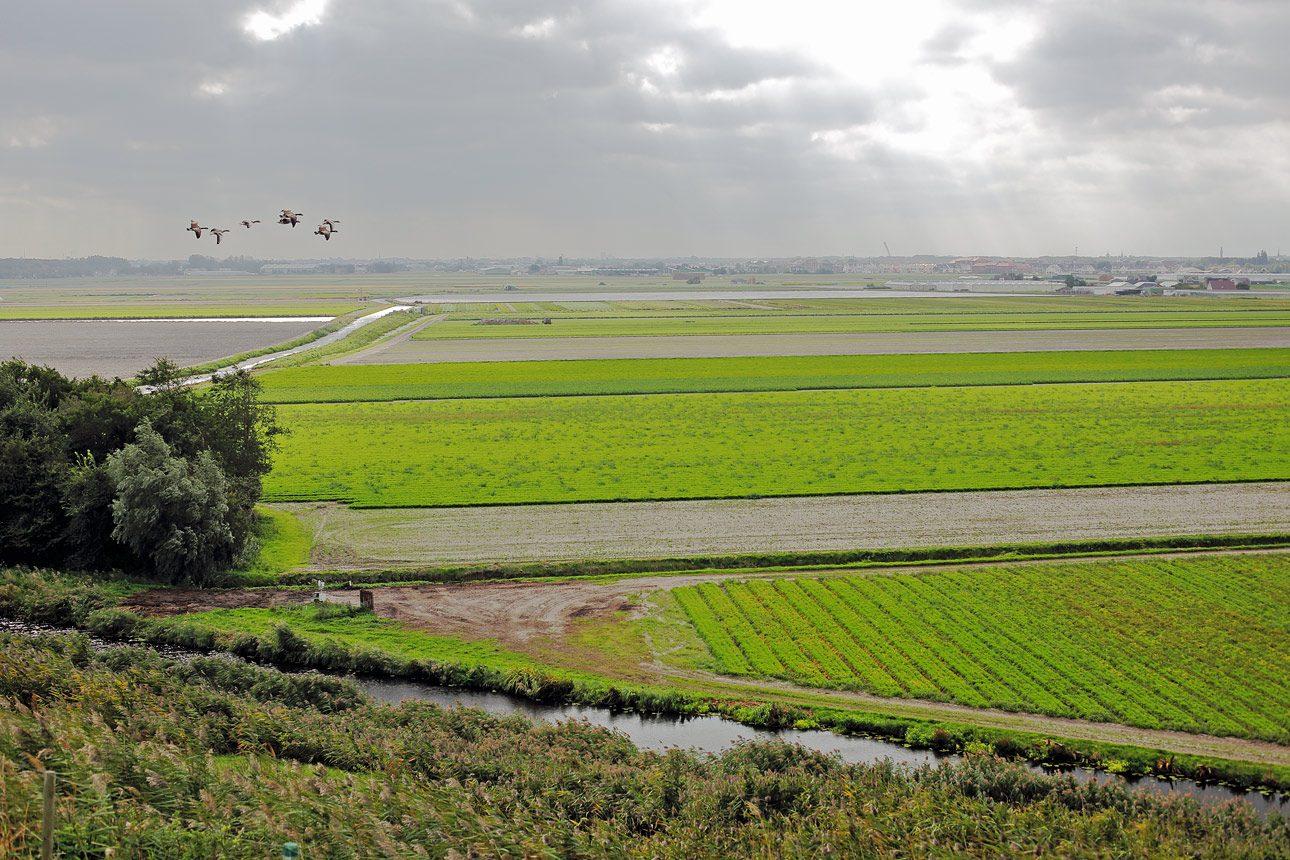 Natuurfotografie Zuid Holland