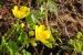 Natuur fotografie plantenbakken in de grachten van Gouda