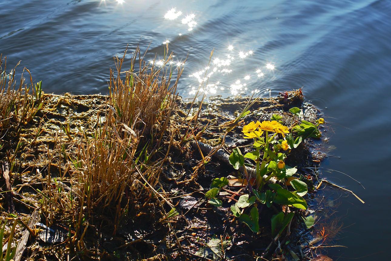 Waterschap fotografie van water