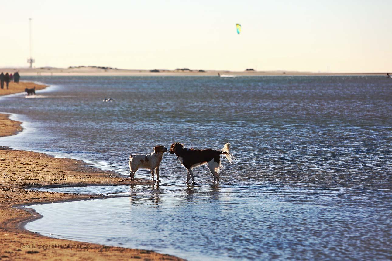 201118-strand-WilmarDik-13