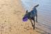 201118-strand-WilmarDik-15