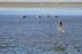 201118-strand-WilmarDik-17