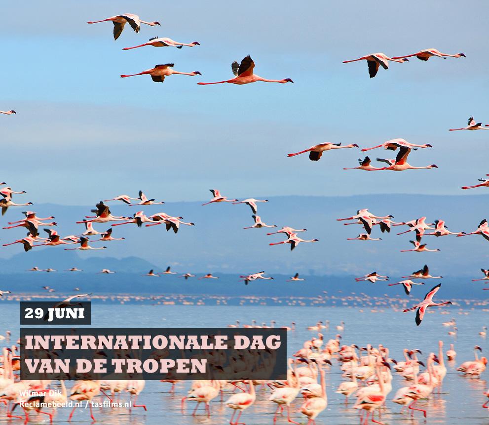 29 juni internationale dag van de tropen