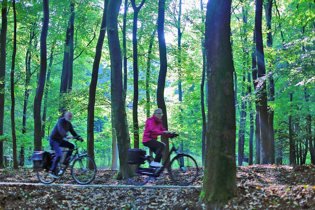 foto van fietsen in de veluwe