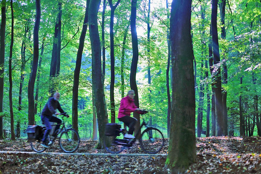 fietsen-in-de-veluwe
