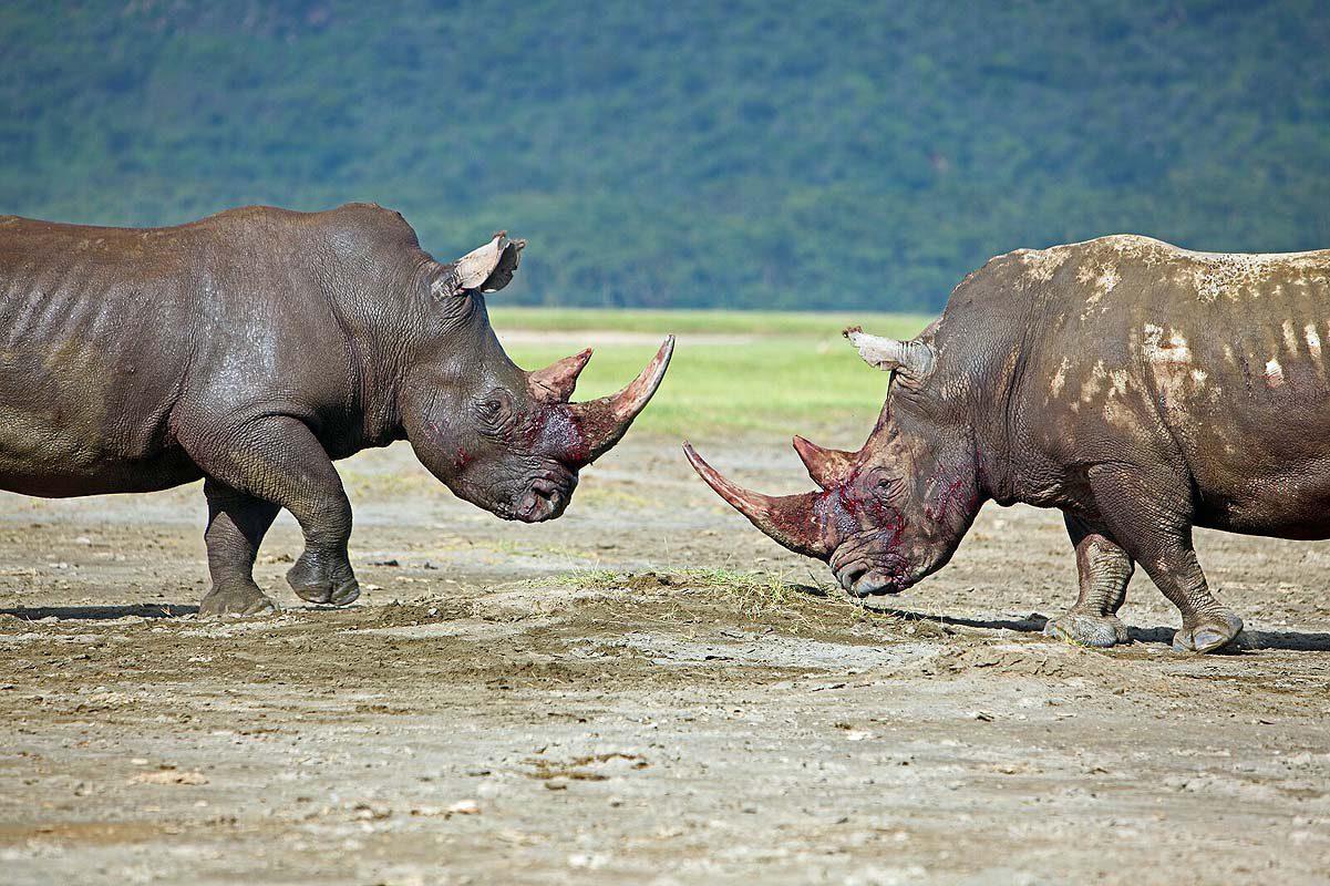 Reisfotografie Kenia