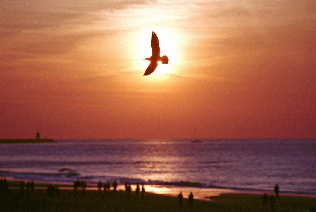 foto Scheveningen strand met meeuw zonsondergang