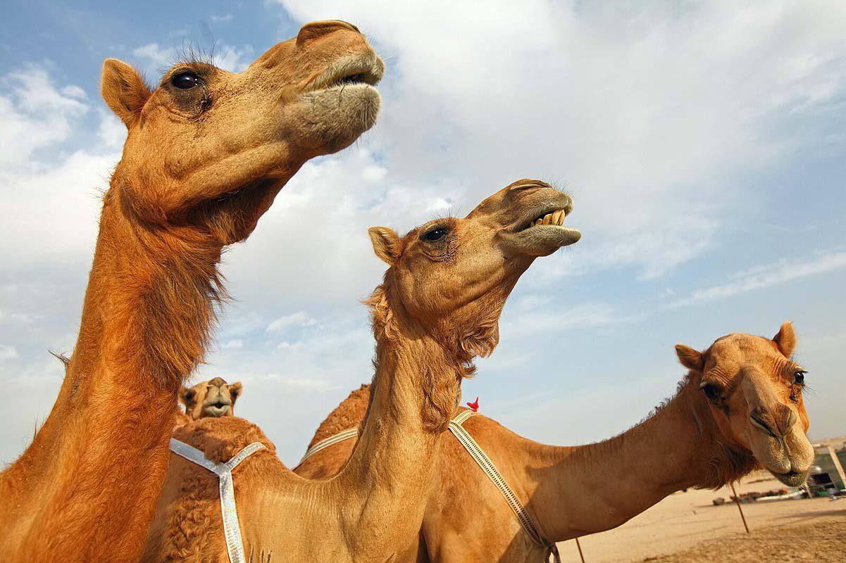 reisfotografie Verenigde Arabische Emiraten